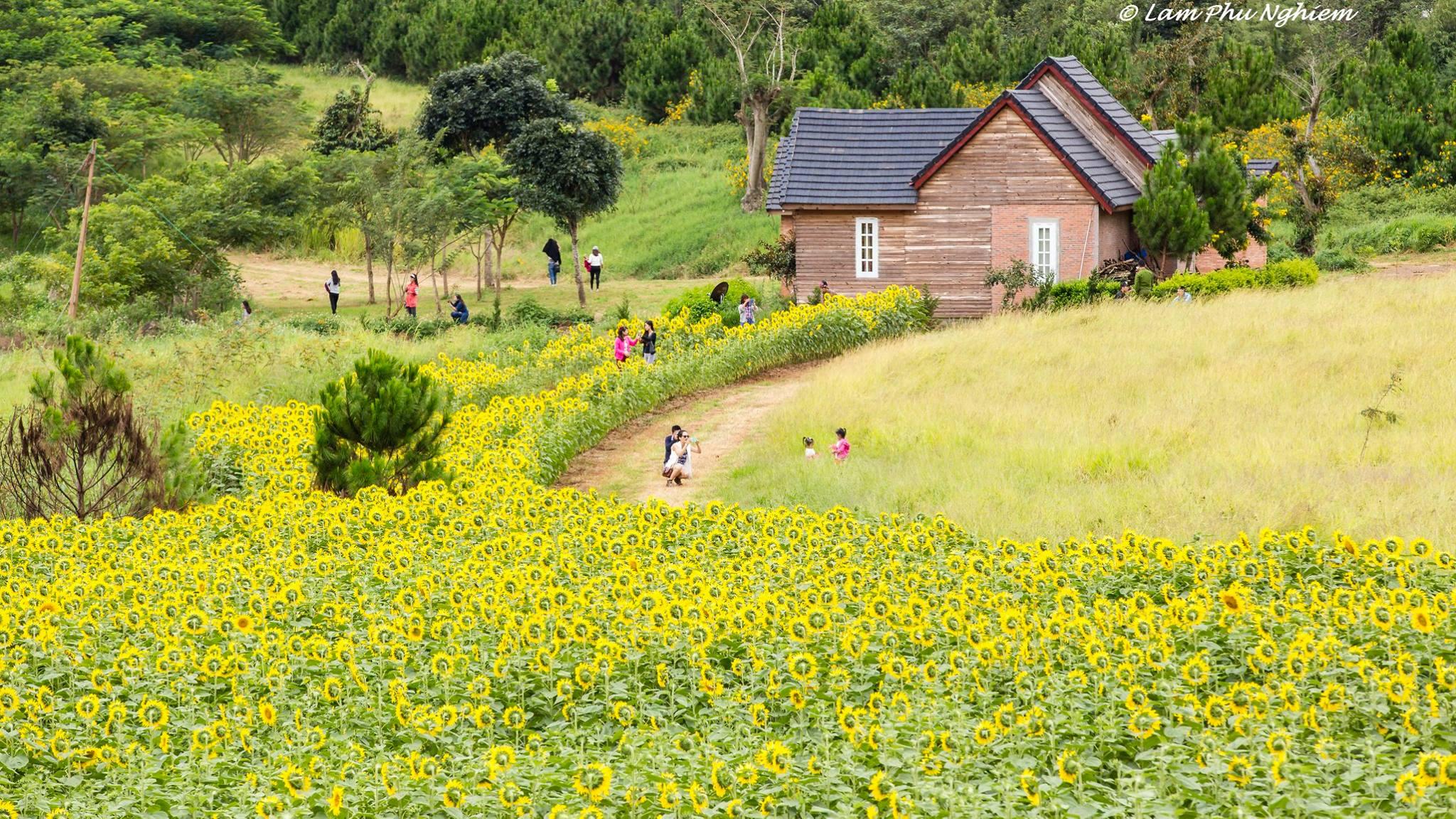 Gợi ý 10 cánh đồng hoa tuyệt đẹp tại Đà Lạt mà bạn cần ghé ngay!