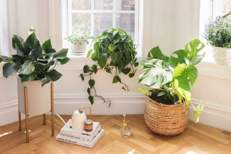 Trồng cây xanh trong nhà - 4 tác dụng tuyệt vời đối với sức khỏe